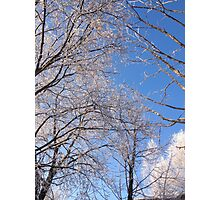 Frosty Trees Photographic Print