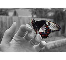 Flutter Photographic Print