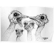 Ostrich Gossip Poster