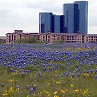Bluebonnets in Las Colinas TX by plsphoto