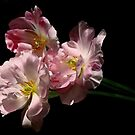 three tulips bid adieu by VickiOBrien