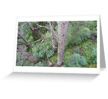 Tingle Forest, Valley of the Giants, Walpole, WA Greeting Card