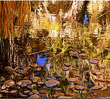 Reflections by Terry Temple