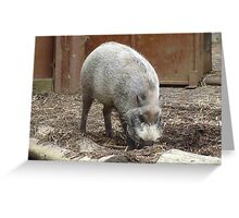 Order: Artiodactyla (even-toed Greeting Card
