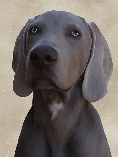 Weimaraner puppy by Cazzie Cathcart
