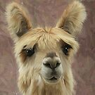 Suri Alpaca baby by Cazzie Cathcart