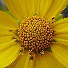 Yellow!  by Hannah Fenton-Williams