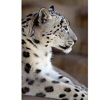 Leopard Profile Photographic Print