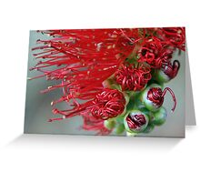 bottle brush bud Greeting Card