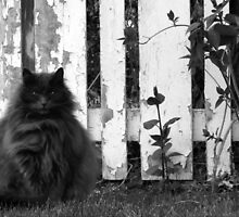 Fat Cat by Fence by Sarah N. Hood