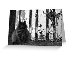 Fat Cat by Fence Greeting Card