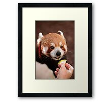 Love Fruit Framed Print
