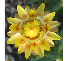 Native Flower Photographic Print