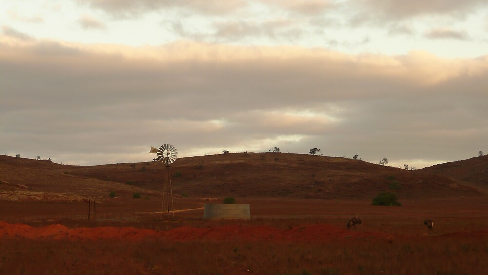 Sheep Station, Western Australia by mystery