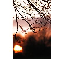Tree Sun and Sunset Photographic Print