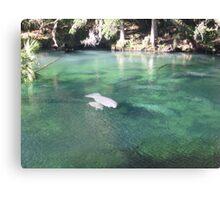 Manatees at Blue Springs Canvas Print