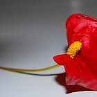 Red Flower by Annette Brown