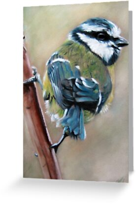 Blue Tit by Valerie Simms