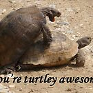 You&#x27;re Turtley Awesome  by taiche