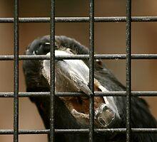 Beak on a Wire by Stephen Mitchell