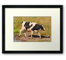 Cow in a Field Framed Print