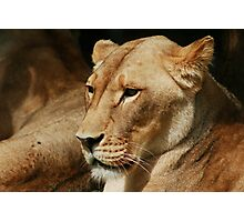 Lion Heart Photographic Print