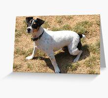 Dog Alert Greeting Card