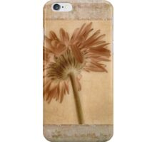 Gerbera  iPhone Case/Skin
