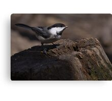 Black Capped Chicadee 2 Canvas Print