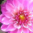 Hot Pink Flower by Lauryn Guyer