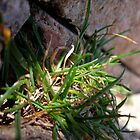 Macro of grass by Lauryn Guyer