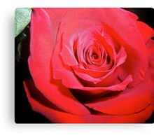 Macro of Red Rose Canvas Print