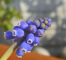 Blue bells by CanDuCreations