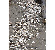 clam massacre... Photographic Print