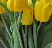 Dutch Tulips by amysasso