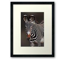 GREVY'S ZEBRA - KENYA Framed Print