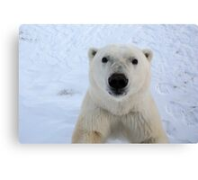 Close Encounter - Polar Bear Portrait Canvas Print