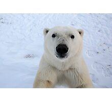 Close Encounter - Polar Bear Portrait Photographic Print