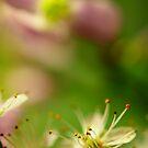 Spring Fever by duncandragon