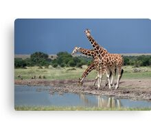 Reticulated Giraffe, Maasai Mara, Kenya Canvas Print