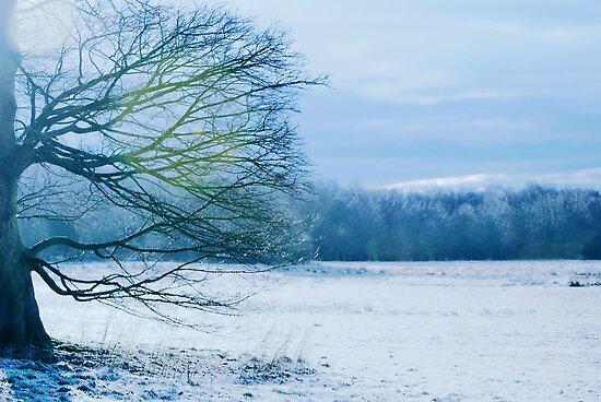 A Winter Scene by Paul Gibbons