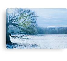 A Winter Scene Metal Print