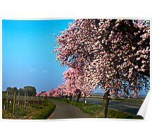 Almond trees in Bockenheim-Germany Poster
