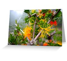 Native flowers. Greeting Card