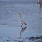 Majestic Blue Heron by TheKoopaBros