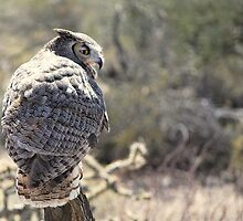 Great Horned Owl by Angela Pritchard