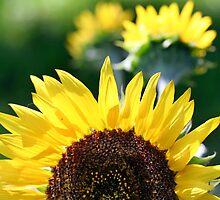 GOOD MORNING SUNSHINE by cdudak