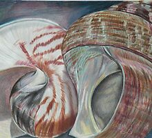 Sanibel Shells by lindybird