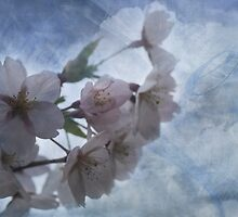 Heavenly Blossoms by cazjeff1958