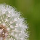 Make A Wish by Christopher Bookholt